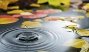 Есента идва с по-ниски температури