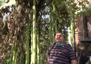 Мъж от Хасково отгледа тиквички дълги 1,8 метра
