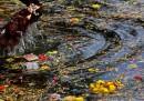 Над 1,5 млн. души без дом след наводнения в Индия