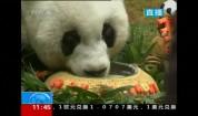 Най-старата панда в света навърши 37 г.