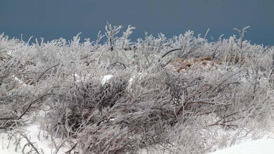 Най-ниските температури – в Разград и Драгоман