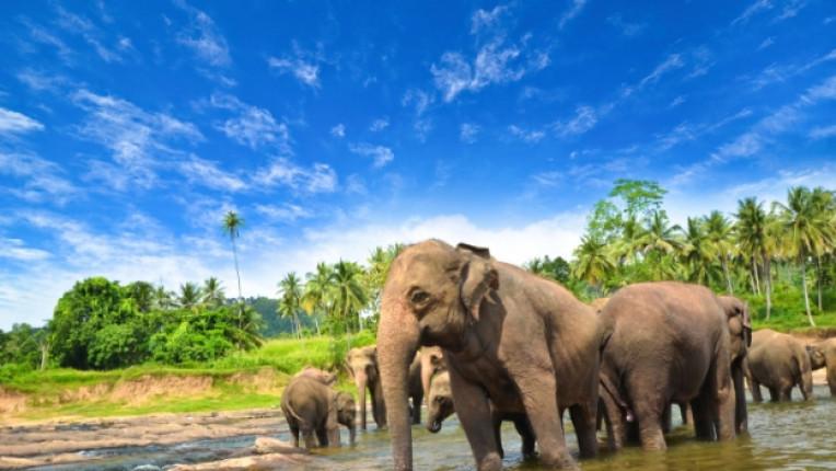 шри ланка слон остров палма екзотика