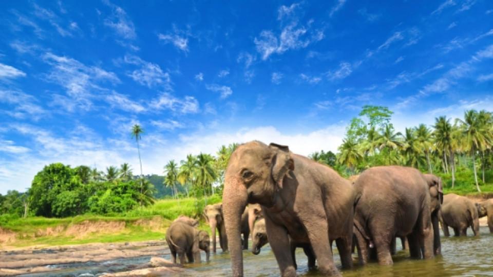 Един ден на острова на удоволствията Шри Ланка