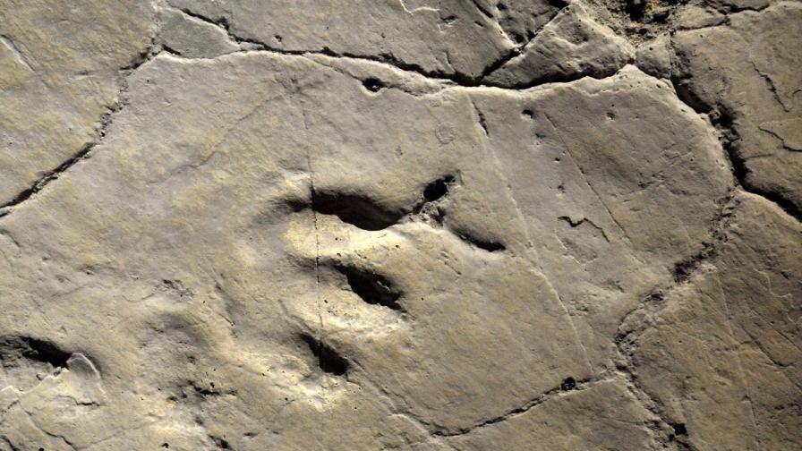 Откриха следи от човешки стъпки на 800 000 години