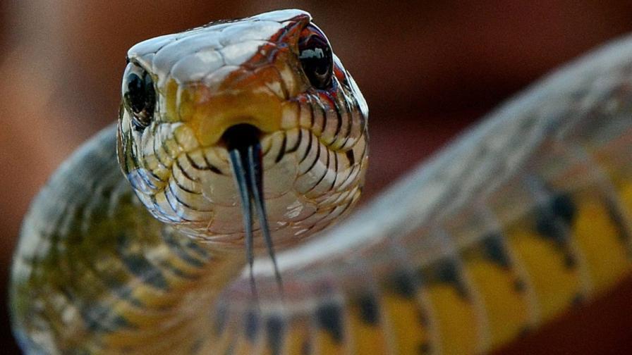 Американски тв пастор умря след ухапване от змия