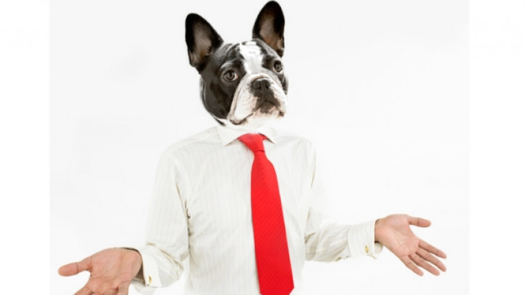 костюм хумор куче вратовръзка