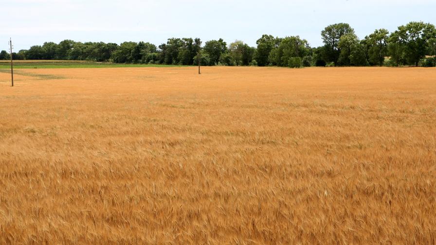 С 15% са поскъпнали земеделските земи за година