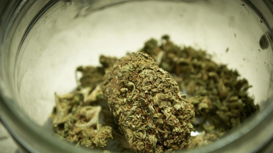 Отглеждането на марихуана в Уругвай от днес е законно