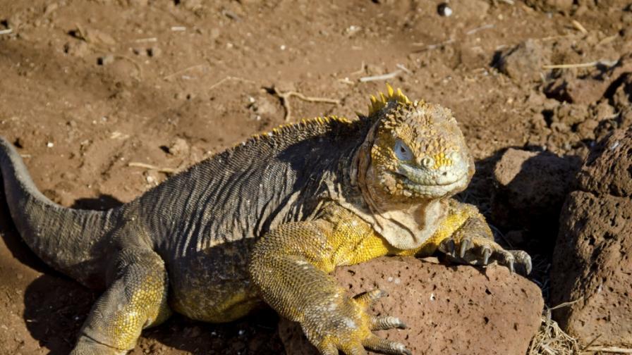 Животът на Галапагоските острови