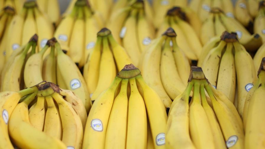 Болест може да унищожи 85% от бананите по света