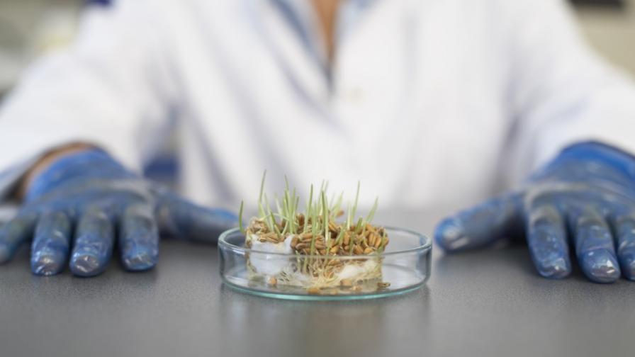 Учени: ГМО могат да помогнат да се запази човечеството