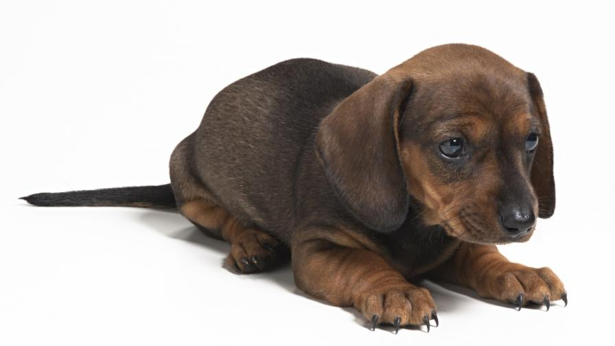 Британка се сдоби с клонирано куче