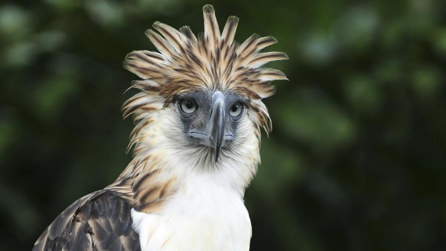 Кои са 100-те най-отличаващи се и застрашени птици в света