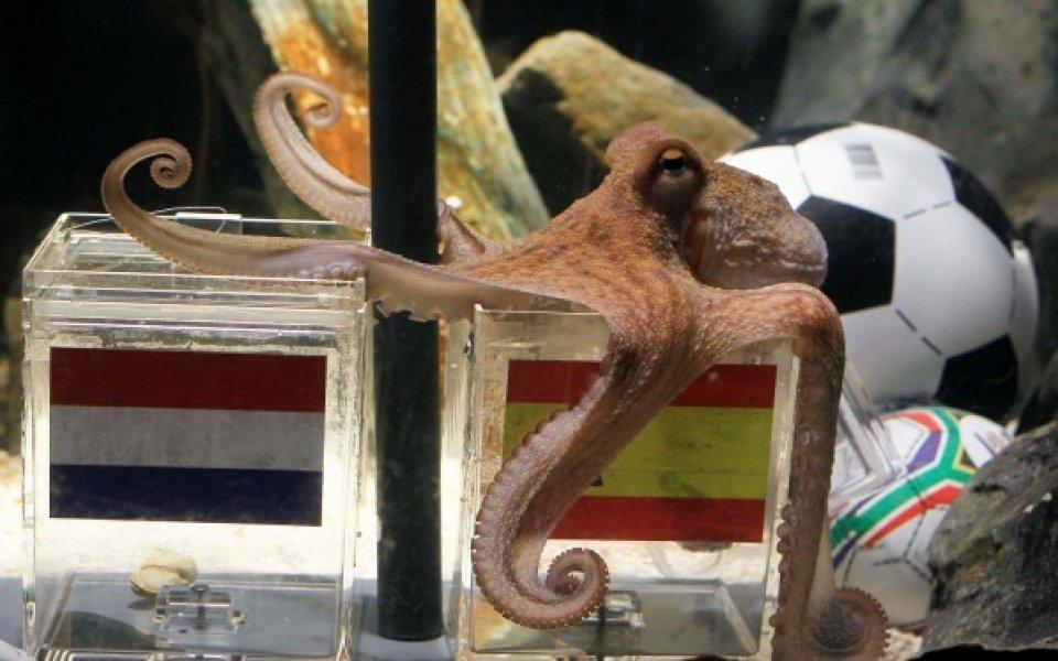 Октоподът Паул получи посмъртна награда