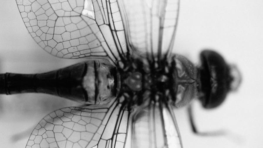 Учени откриха насекоми с разменени полови органи
