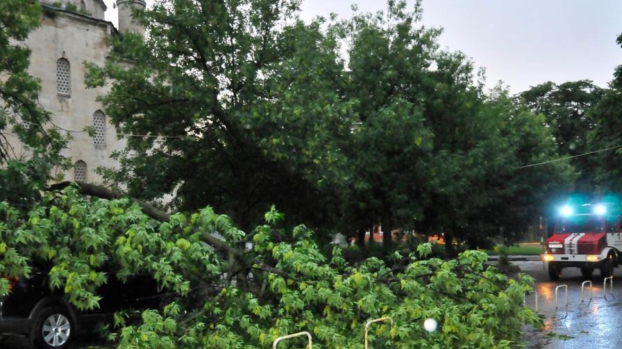 След снощната буря: паднали дървета и населени места без ток