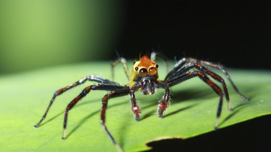 Един начин да спрем да се страхуваме от паяци