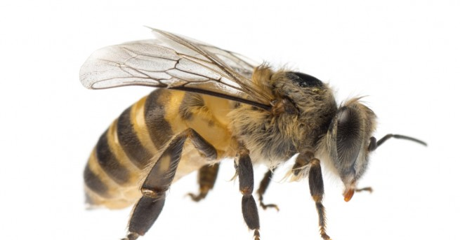 Снимка: Четири пчели се настаниха в окото на жена