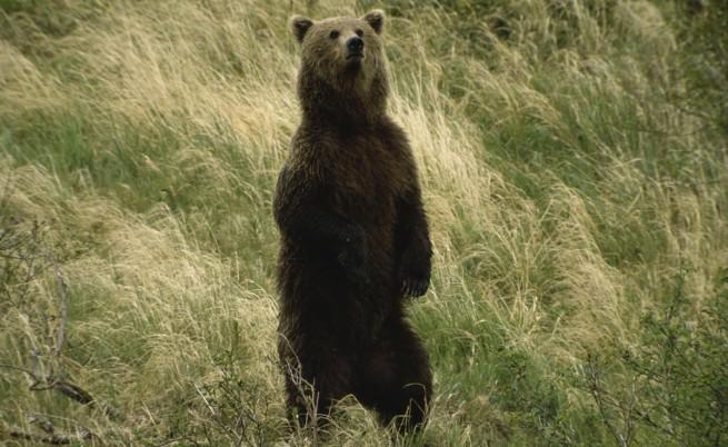 Щетите и злополуки с мечки нямат общо с броя им