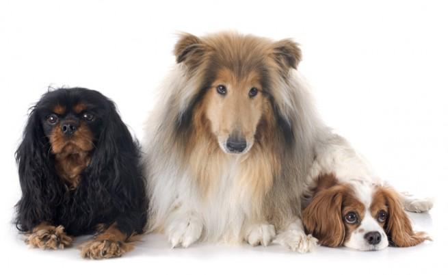 Тези кучета станаха хит в социалните мрежи