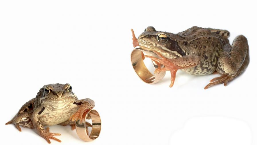 Индия: 1000 души присъстваха на 6-часова венчавка на жаби