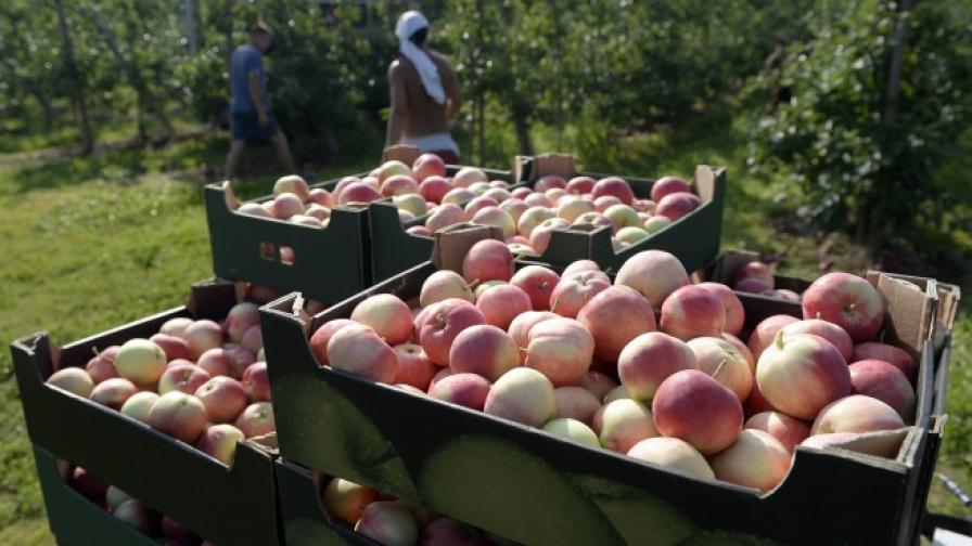 Поляците ще ядат ябълки в отговор на санкциите от Русия