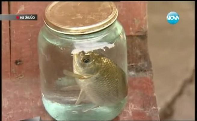 Къщите в Мизия са пълни с риба
