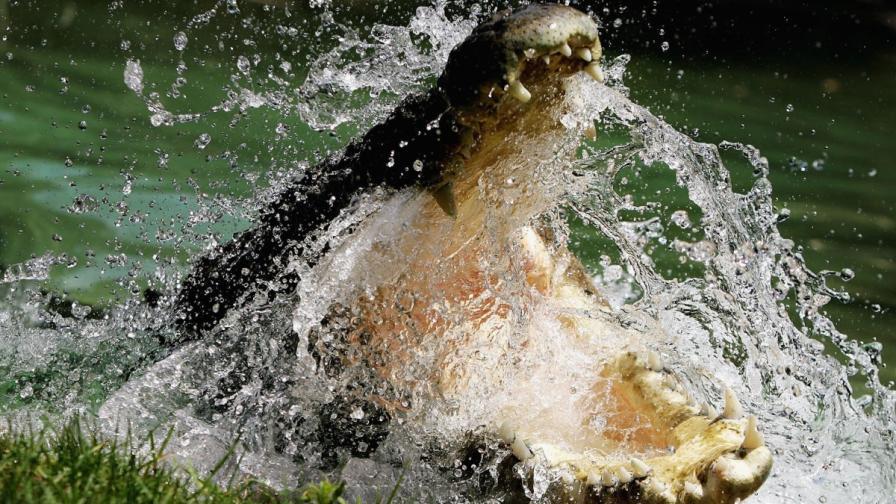 За да впечатли момиче, 18-годишен скочи при крокодили