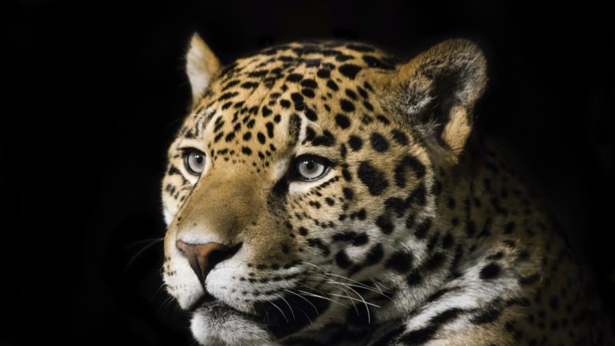 Наказания за смъртта на ягуара от Ловеч - забележка и предупреждение