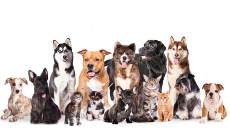 животно домашен любимец куче коте котка