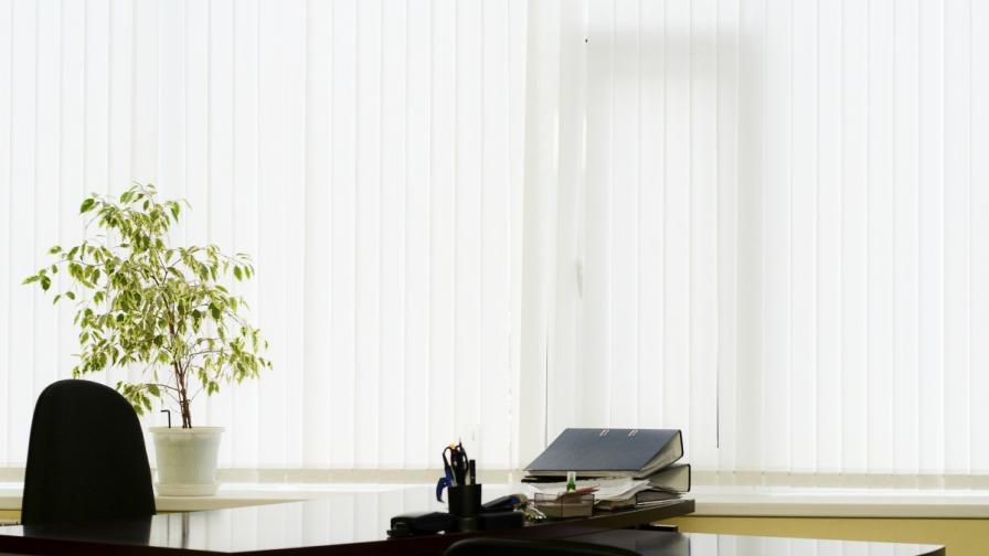 Растенията в офиса увеличават продуктивността