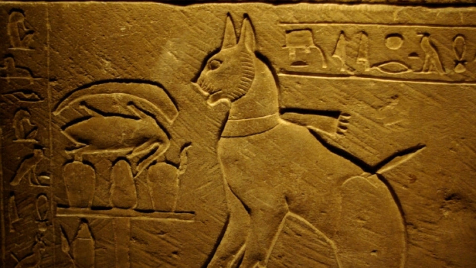 Египетската свещена котка идва у нас