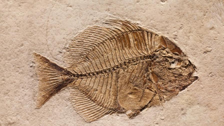 Контактният секс се е появил преди 385 милиона години
