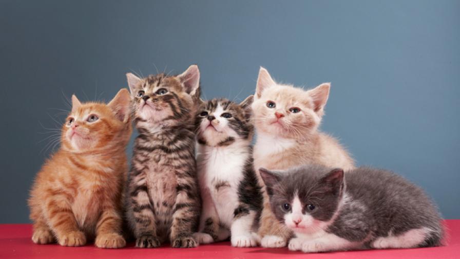 Спасители събориха стените на дом, за да спасят 150 котки