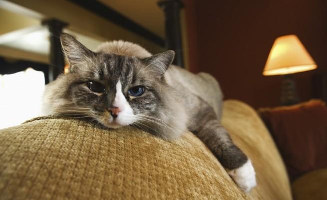 Генетици доказаха уникалността на домашните котки