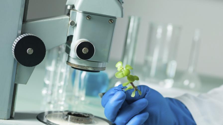 Вируси са променили генома на растения
