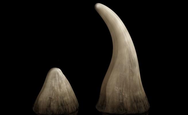 Рог от носорог