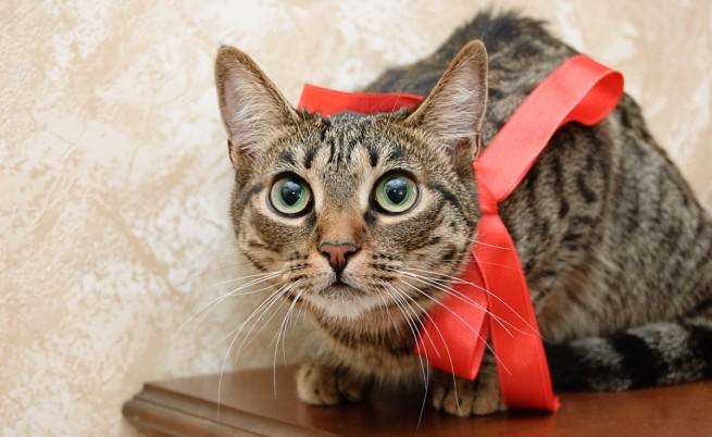 Защо котките сядат в кръг и отказват да се преместят?
