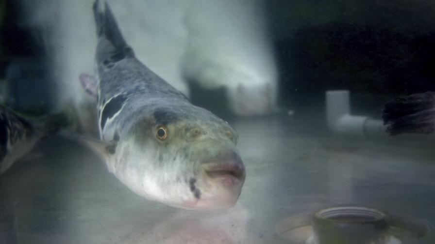 Риба излиза от водата...за да я черпят с бира