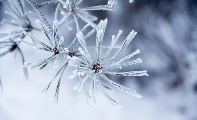 Чакаме сняг за Нова година
