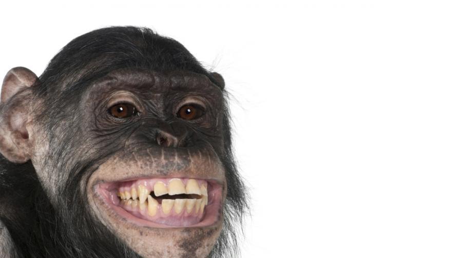 Приматите не са хора, реши апелативен съд в САЩ