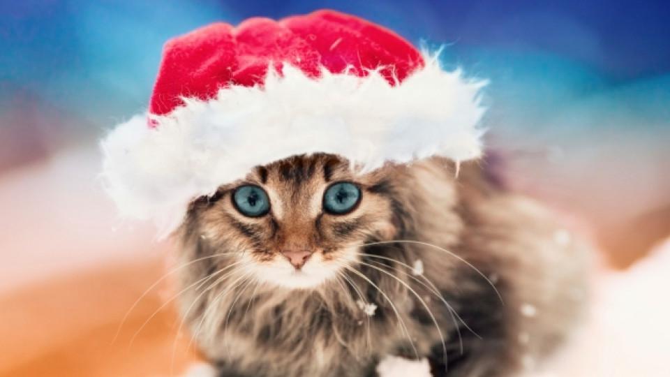 Не подарявайте животни за Коледа