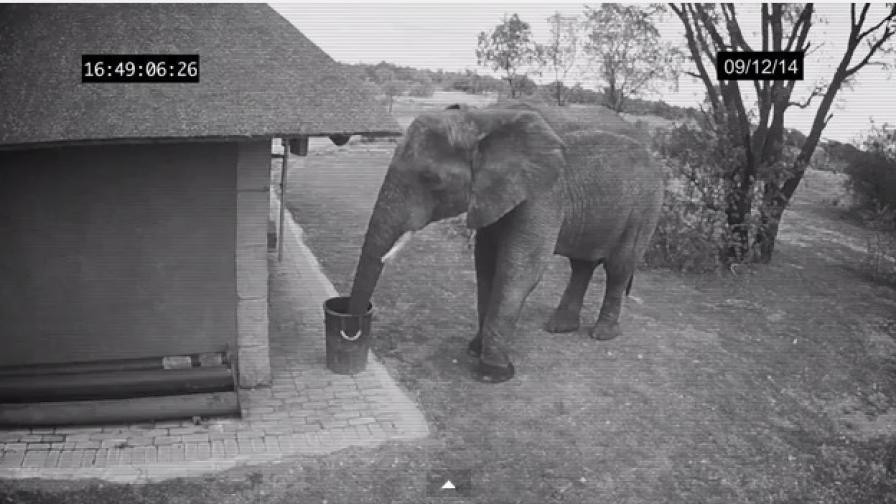 Камера засне как слон хвърля боклук в кошчето