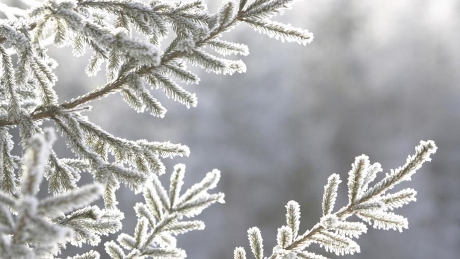 Студено с максимални температури от -3° до 2°