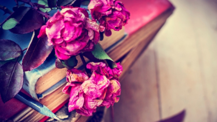 книга рози романтика