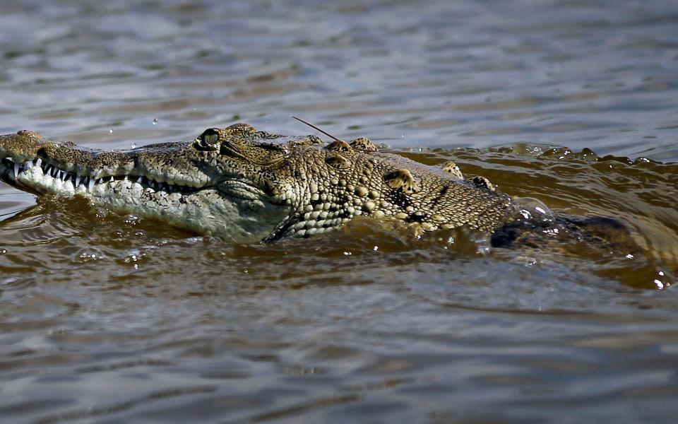 Футболист беше убит от крокодил, докато тренира
