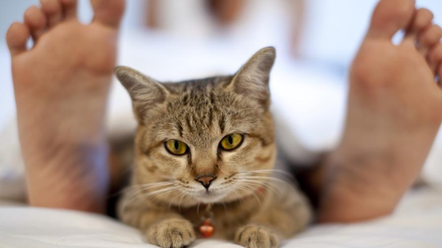 Котки предупредиха стопанката си, че има рак