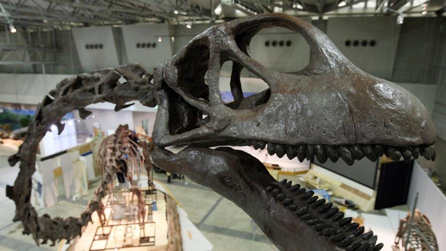 """Откриха нов динозавър, наречен """"Дракон на Цицзян"""""""