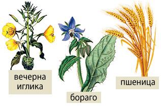 Единствено във Vitaslim BEAUTY трите растителни масла са в течен и пресен вид