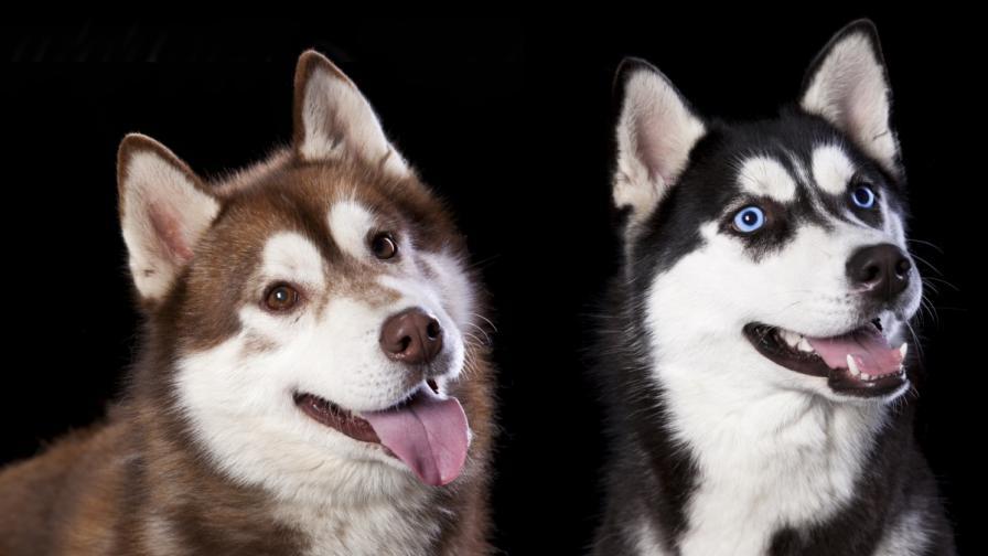 Кучетата са били опитомени преди 15 хил. години